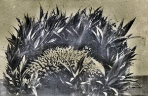 fig3-ananas